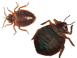 Georgia Bed Bug Registry