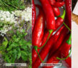 Diaphoretic Herbs