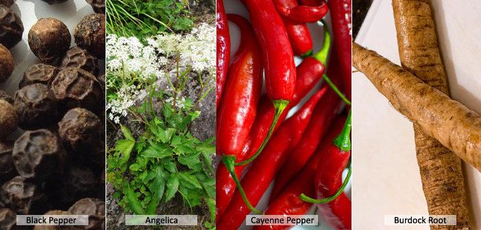 Top 10 Health Benefits Of Diaphoretic Herbs