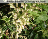 Top 10 Health Benefits Of Turkey Rhubarb