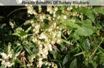Turkey Rhubarb Benefits