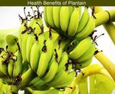 Health Benefits Of Plantain