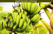 Plantain Benefits