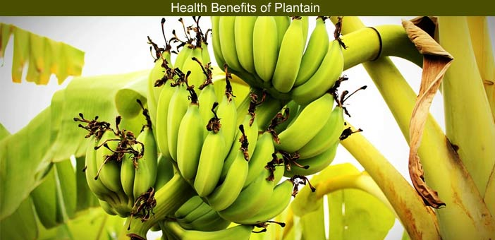 Plantain Benefits