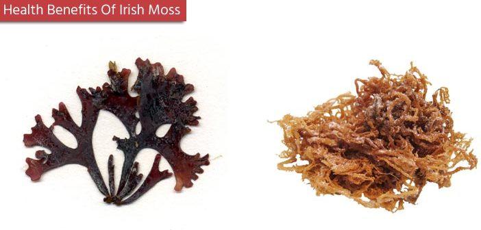 10 Health Benefits Of Irish Moss
