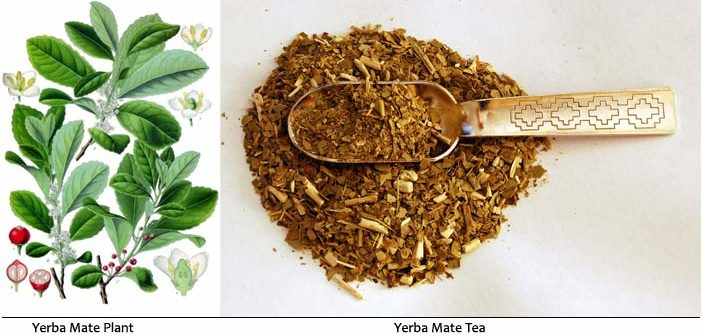 Health Benefits Of Yerba Mate Tea