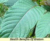 10 Health Benefits Of Kratom