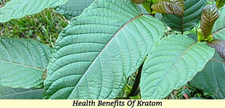 Health Benefits Kratom