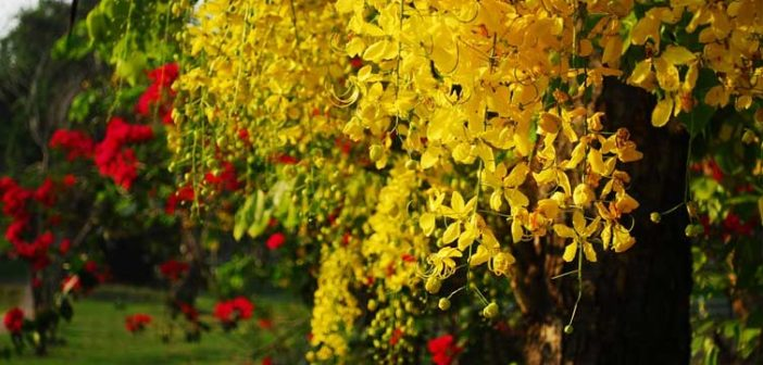 Top 10 Health Benefits Of Cassia Seed