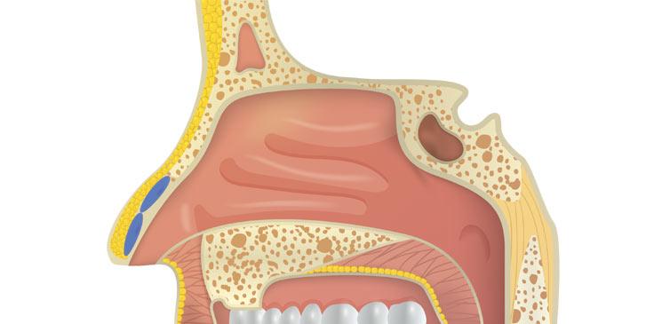 Respiratory System Nose