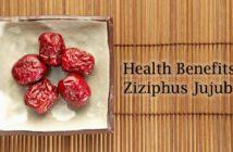 Ziziphus Jujuba Benefits