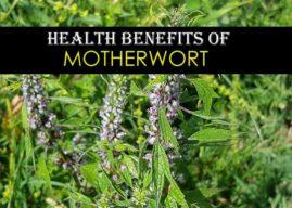Top 10 Motherwort Health Benefits