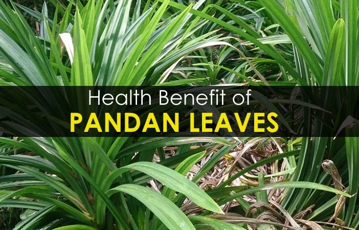 10 Health Benefit of Pandan Leaves - Side Effects, Uses
